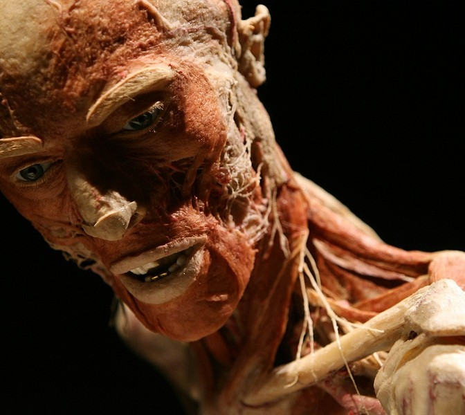 our body our world the body worlds exhibition 171 a little