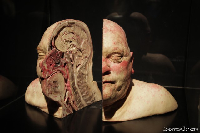 Human head cut in half.